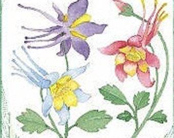 Columbine seeds - mixed colors