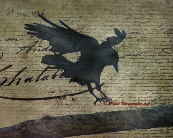 Rustic Gothic Raven Black Bird That's How the Crow Flies Art Matted Picture A674