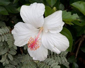 White hibiscus photo pillow