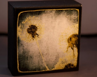 Wild Dandelions 4x4 Original Fine Art Photograph on Wood Panel