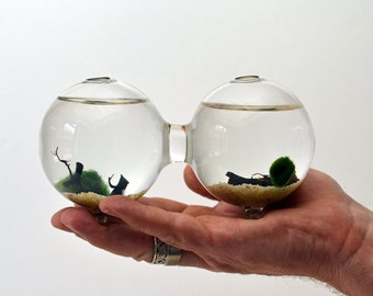 Marimo Aquatic Terrarium - Japanese Moss Ball - Double Aquarium - Home Decor - Office Decor - Green Gift