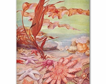 "Starfish Art Print, 1930s Ocean Artwork, Vintage Beach House Wall Art --- ""Sunburst Starfish & Sea Urchins"" No. 319"