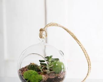 Hanging terrarium glass ball.