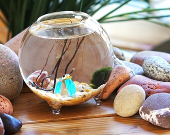 Miniature Marimo Moss Ball Orb Terrariums Aquarium with Penguin