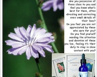 CHICORY  flower essence  - POSSESSIVE NEEDINESS