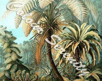 Tropical Plants Printable Vintage Instant Download