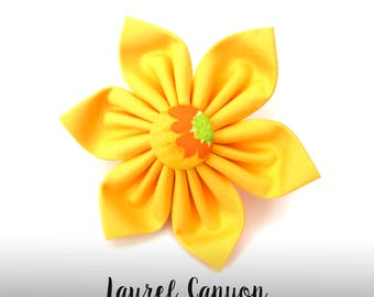 Yellow Dog Collar Flower; Yellow and Orange Dog Flower: Laurel Canyon in Yellow