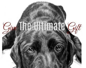 Pet Portrait Custom Sketch Pet Memorial Special Size & Pricing Option on Hand Drawn Sketch