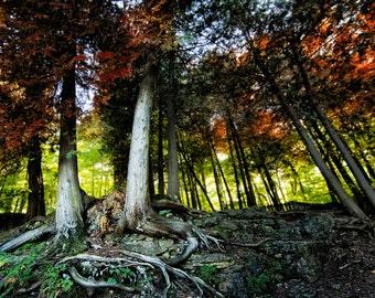 Two Trees- Photograph, Landscape, C-Print