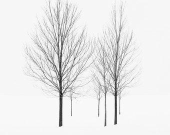 Minimal black and white winter tree photograph. Zen Scandinavian style landscape photography. Nordic ski chalet art. Nature lover gift.