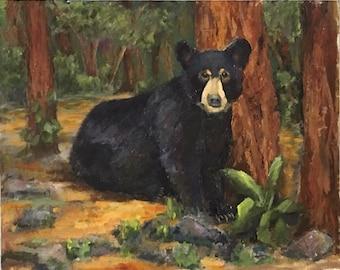 Adolescent Black Bear in Redwood Forest