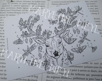 Card mailing deer and Butterfly coloring
