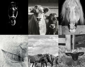 Canvas Prints - Ready to Hang - Fine Art Photography - Photo on Canvas - Wall Art - Farmhouse Decor - Gifts - Pictures - Horses - Cows