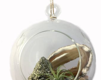 Gemstone Air Plant Terrarium
