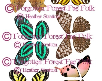 Assorted Butterfly Wings