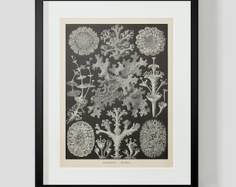 Vintage Ocean Life Haeckel Print Plate 83