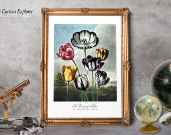 Bloom Flower Prints, Flower Decorating, Tulip Florals Print, Tulip Florals Poster, Tulip Art Print, Tulip Print - E9g13