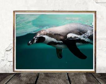 Penguin Digital Print, Digital Download, Ocean, Animal, Bird, Swim, Photography, Waves