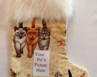 203 Cat Tails Pet Stocking