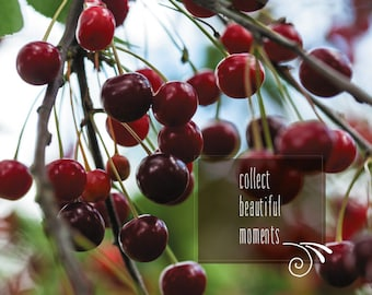 Cherries post cards. POSTCARD for Postcrossers. collect beautiful moments