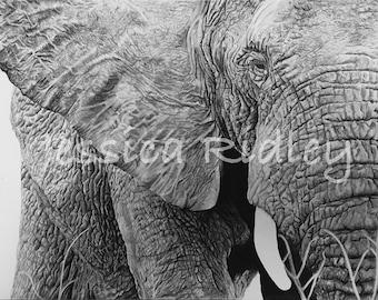 ELEPHANT PRINT Charcoal