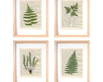 Fern set of 4 prints-botanical fern set of 4 dictionary print-kichen wall art-kitchen decor-botanical wall art-home decor-gift idea-DP237