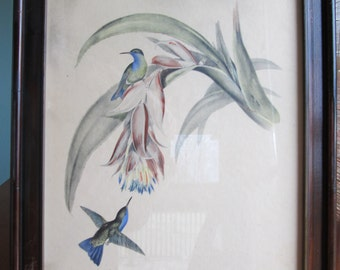 Antique John Gould Hummingbird Framed Art Lithograph, Print, Nature, Traditional Home Decor