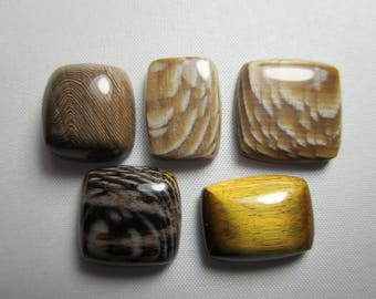 Fossilized Sycamore Cabs / Choice of Fossil Wood Cabs or Tigeriron Cabochon