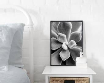 Velvet Succulent A3 Art Print, Black & White Poster, Abstract Art, Cactus Print, Botanical Art Print, Modern Art