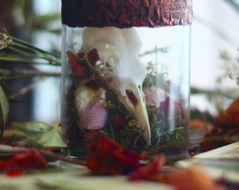 Bird Skull Specimen Necklace - Skull in a bottle - Macabre Jewelry - Witchy - Gothic