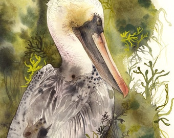 Brown Pelican Print, nature sea bird, pelican art, watercolor painting, print