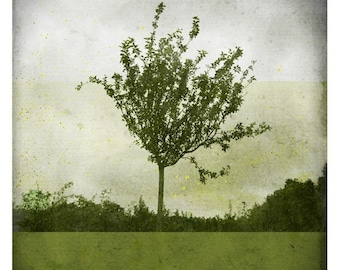 Ben Verdure (Nature Photography - Fine Art Print - Apple Tree - Country - Spring - paints - Dark Green)
