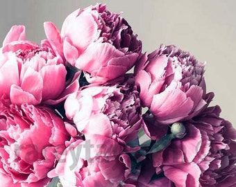 Peony Print - Flower Photography- Pink Silver, Gray, Pink Peonies Wall Art Print