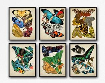 Botanical Print Set Butterflies, Butterfly Botanical Print Set, Home Decor, Vintage Botanical Butterfly Art, Butterfly Reproduction GR003