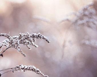 Winter Photography nature neutral beige pale light purple frost ice cold tan under 25 romantic home decor wall art photo - Fine Art Print