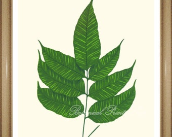 """Foliage Wall Art, Fern Print #13. Gymnogramma. Botanical Print, Ferns,  5x7""""  8x10"""" 11x14"""""""
