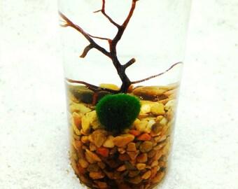 10X Marimo Moss Balls Live Aquarium Plants