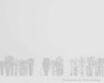 Winter's Veil II, blizzard, snowstorm, winter photo, minimalist photo, seasonal photo, black and white, trees, wall art, fine art print