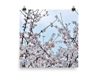 Korea Photography, Cherry Blossom Photo, Wall Art, Travel Photography