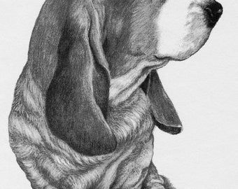 Basset Hound from original charcoal drawing.