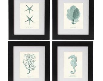 Nautical Print Set of 4 in Seafoam, Nautical Wall Art, Posters, Beach Art, Coastal Art, Corals, Seahorse Print, Starfish, Coastal Decor