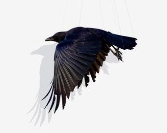 Crow, Animal Art, Bird Photography, Bird Art Print Photography, Fine Art Print, Suspend