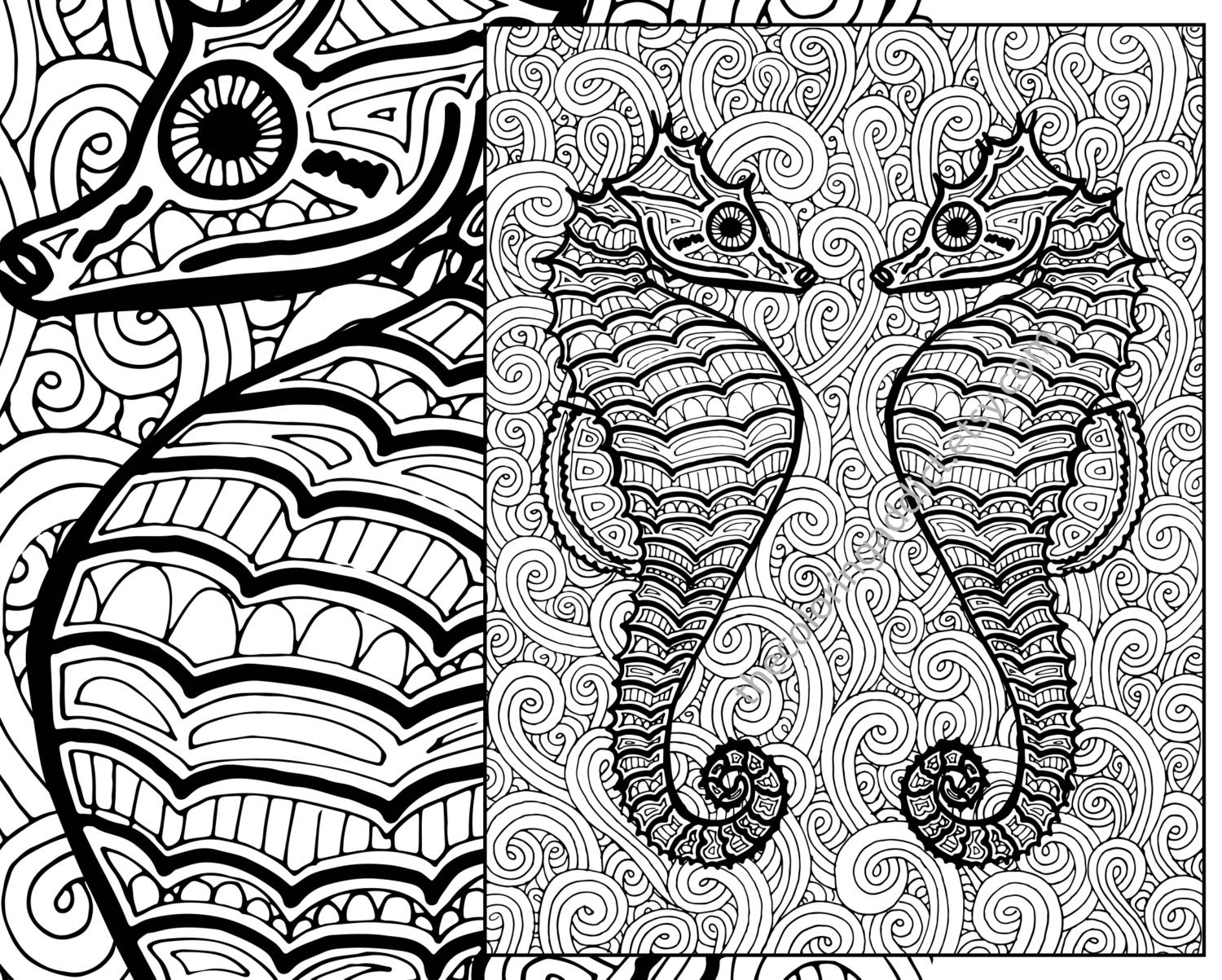 seahorse coloring page adult coloring sheet ocean colouring