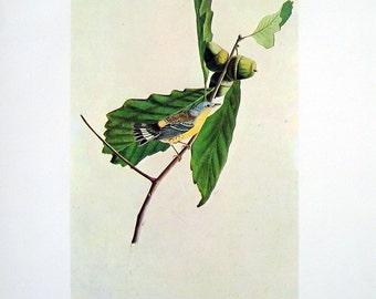 Magnolia Warbler - Vintage Audubon Bird Print - 1966 Vintage Book Page - 13 x 11