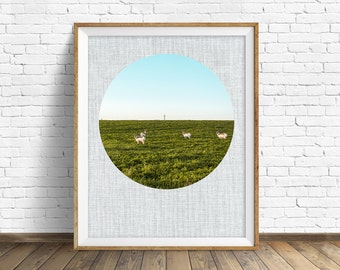 "photography, landscape, instant download art, printable art, photography, instant download, farmhouse chic, nature -""Antelope and Alfalfa"""