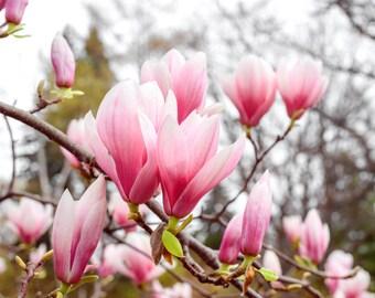 Magnolia Flower Print, Magnolia Photography, Magnolia Print, Magnolia Art, Fine Art Print, Spring Home Decor