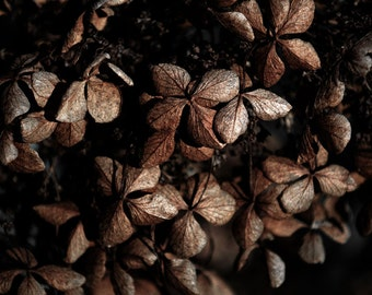 Dark Floral, Flower Photography, Hydrangea Wall Art Print