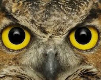 Owl eyes counted cross stitch kit