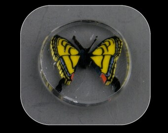 Swallowtail by Greg Chase Murrine Boro Cobachon - 127 A