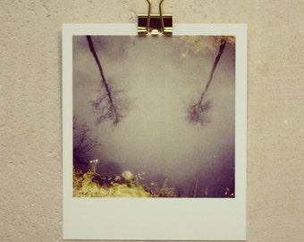 Postkarte Mirror Tree, kleiner Kunstdruck in Polaroidoptik, mit Wasserspiegelung